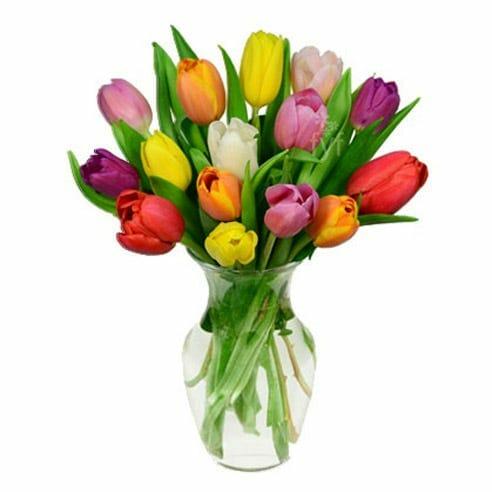 Rainbow Tulips